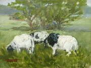 Three Sheep Grazing